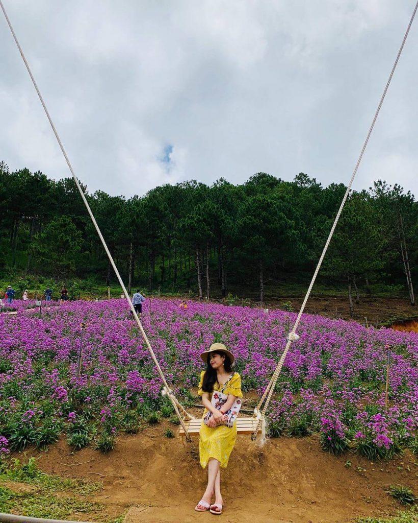 cánh đồng hoa tím địa điểm sống ảo Đà Lạt