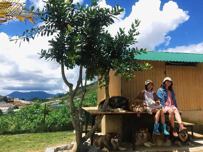 Chụp ảnh cùng Sen tại trại chó Black Rock Garden địa điểm sống ảo Đà Lạt