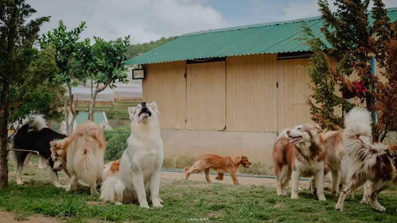 trại chó Black Rock Garden địa điểm sống ảo Đà Lạt