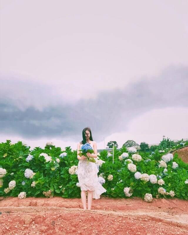 vườn hoa cẩm tú cầu địa điểm sống ảo Đà Lạt